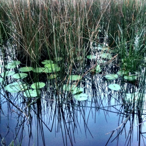 swamp #iphoneography
